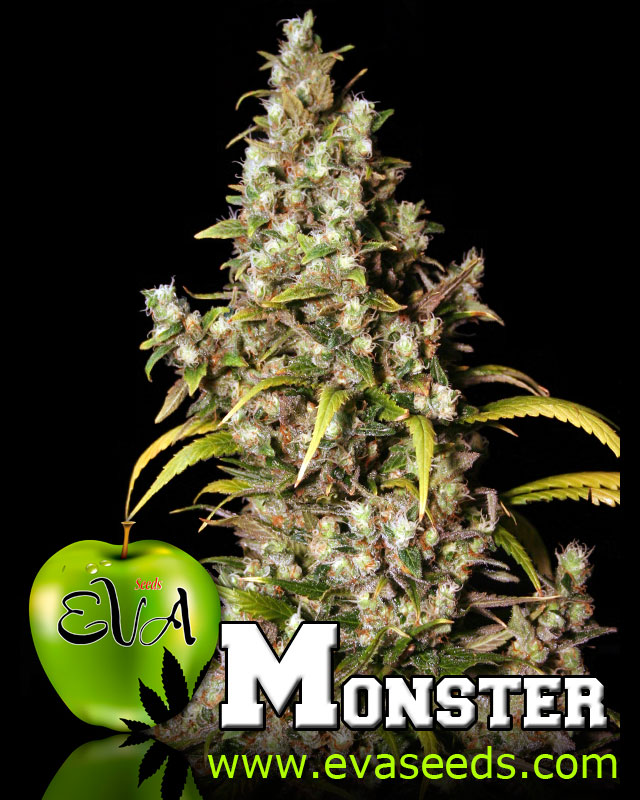 Monster - Eva Seeds